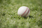 Cricketball auf gras — Stockfoto