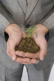 Businessman holding a sapling — Stock Photo