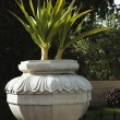 Plants in urn in a garden — Stock Photo