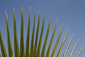 Close-up of palm leaves — Stock Photo