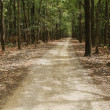 Постер, плакат: Dirt road passing through a forest
