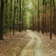 Dirt road passing through a forest — Stock Photo #33079993