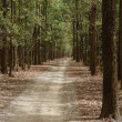 Dirt road passing through a forest — Stock Photo #33080157
