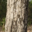 Close-up of a tree — Stock Photo