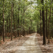 Dirt road passing through a forest — Stock Photo #33080731