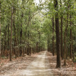 Dirt road passing through a forest — Stock Photo