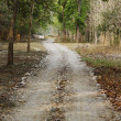 Dirt road passing through a forest — Stock Photo #33081585