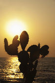 Silhouette of prickly pear cactus on the coast — Stock Photo
