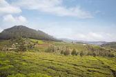 Tea cultivation in the valley — Stock Photo