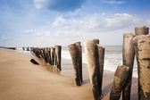 Wooden posts on the beach — Stock Photo
