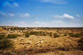 Bush growing at arid landscape — Stockfoto
