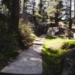 Pathway in a forest — Stock Photo