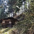 Hut in a forest — Stock Photo