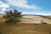 Plant growing on sand dune — Stok fotoğraf