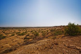 Bush growing at arid landscape — Stok fotoğraf