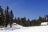 Trees on a snow covered hill, Kashmir — Stock Photo