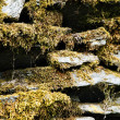 Stock Photo: Lichen on rocks, Manali