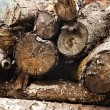 Stacks of logs in a forest — Stock Photo #33274733