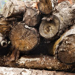 Stacks of logs in a forest — Stock Photo