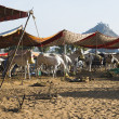 Horses at Pushkar Camel Fair — Stock Photo