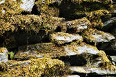 Lichen on rocks, Manali — Stock Photo