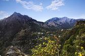 Alberi su una collina — Foto Stock