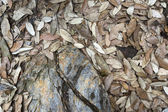 Dry fallen leaves — Stock Photo
