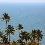 Постер, плакат: Palm trees on the beach