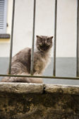 Cat sitting on a wall — Foto Stock