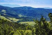 Tress on a landscape — Stock Photo