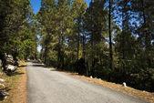 Cesta lesem, uttarkashi okres, uttarakhand, indie — Stock fotografie