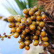 Date palm — Stock Photo #32547311