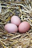 Jajka — Zdjęcie stockowe