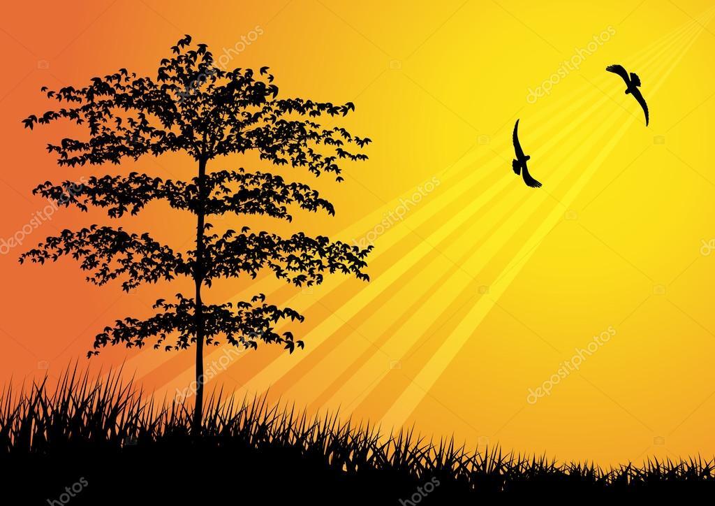 Resultado de imagem para imagens de pássaros voando