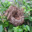 Stock Photo: Empty bird nest