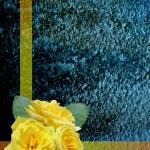 Rose background — Stock Photo #37849207
