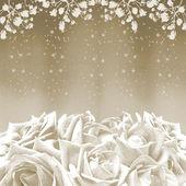 Beautiful white roses — Stock Photo