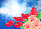 Roses and anthurium flower on sky background — Stock Photo