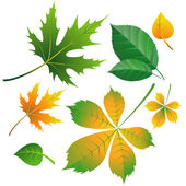 Set of leaves on white — Stock Vector