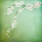 Vintage background with cherry blossoms branch — Stock Photo