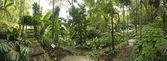 Tropical Garden, Malaysia — Stock Photo