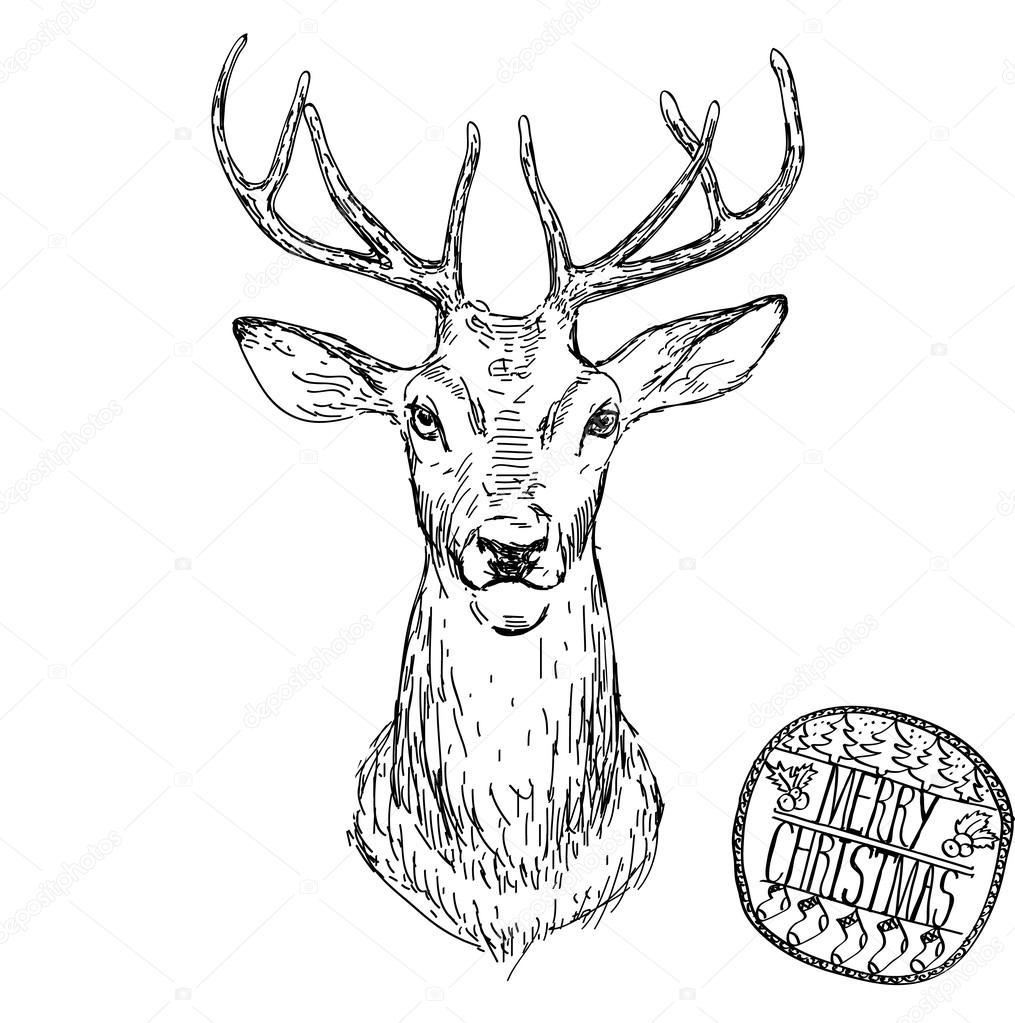 Deer Michael Tmad Finney likewise johngordonart moreover Buck Drawing also Stock Illustration Deer Head Vector Animal Illustration as well Cow skull. on deer antlers sketch