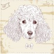 Poodle head in vector, dog in vintage style on grunge background — Stock Vector
