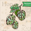 Vector hop hand drawn on vintage paper background — Vettoriali Stock