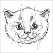 Kitty in vector on white background — Stock Vector