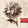 Vector illustration of flower hand drawn on vintage background — Stock Vector #36833389