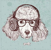 Hipster poodle with glasses — Stock Vector