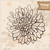 Vector illustration of flower hand drawn on vintage background — Stock Vector