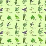 Seamless Pattern Herbs set, vector hand drawn illustration — Stock Vector #49233819