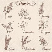 Herbs set, vector hand drawn illustration — Stock Vector